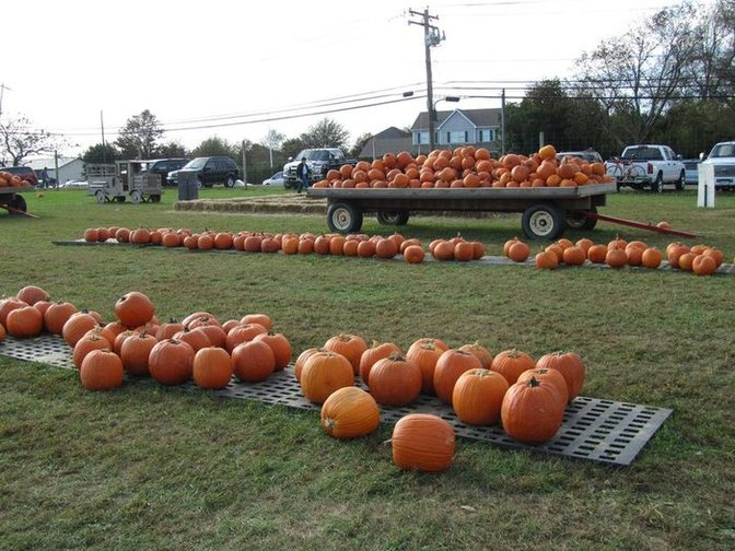 pumpkin picking on LI