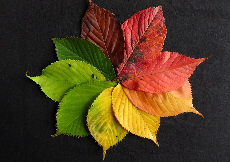 Bring the Outside In – Using the Fall Outdoors to Decorate Indoors!