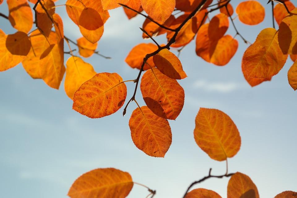 Photo by Hans, via Pixabay | https://pixabay.com/en/leaves-autumn-orange-red-blood-red-228110/