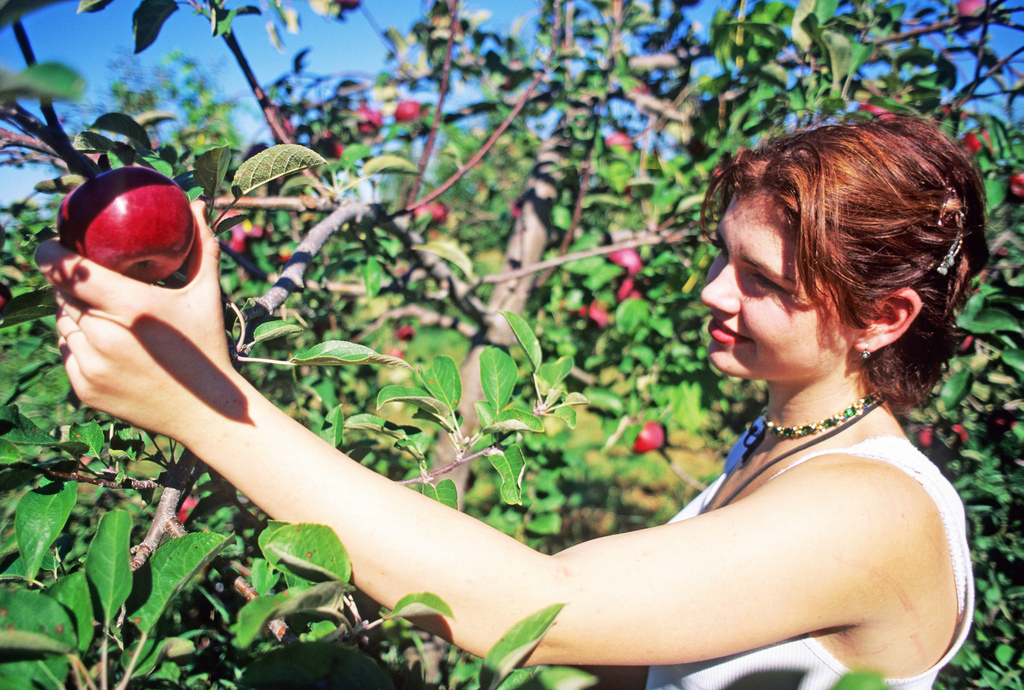 girl-picking-apple