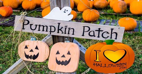 best-pumpkin-patches