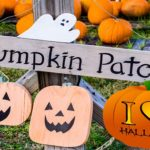 best-pumpkin-patches