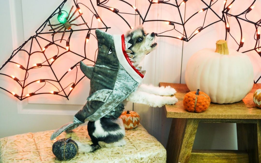 """Pet Costume Contest, Free """"Boo Bags"""" at the """"Who's Your Boo?"""" Event"""